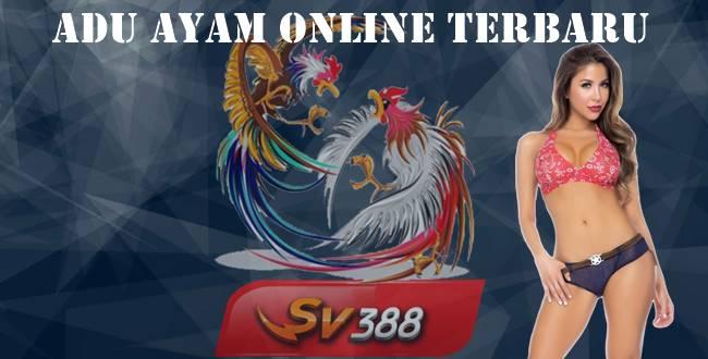 Adu Ayam Online Terbaru